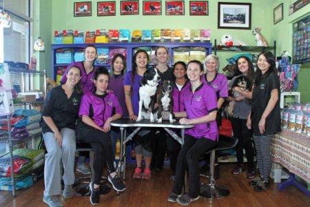 Green Dog Spa in Jacksonville FL Team