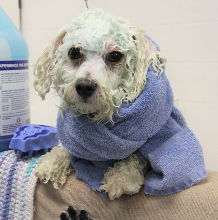 Dog Grooming Jacksonville FL - Bath & Brush Package