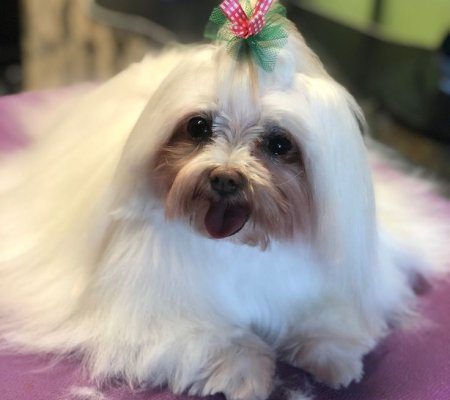 Dog Grooming - Mini Groom